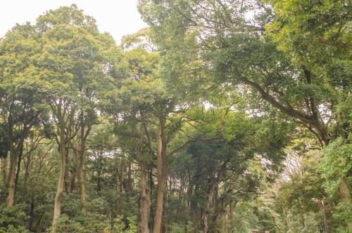 Meiji 3