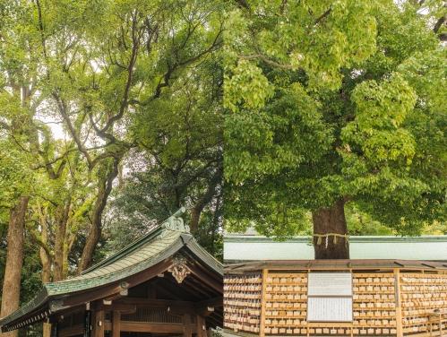 Meiji Combo 2