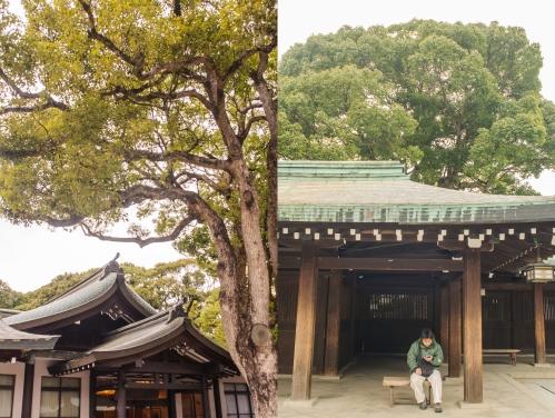 Meiji Combo 3